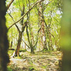 【tjm665】さんのInstagramをピンしています。 《#木漏れ日#林#森#森林#自然#forest #tree #wood #nature #写真好きな人と繋がりたい #写真撮ってる人と繋がりたい #写真部 #followme #trip #travel #travelphotography #traveller #旅行#旅》