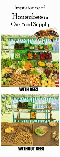 Importance of Honeybee in Our Food Supply