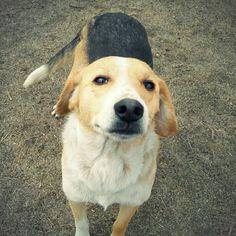 Bigi es un perro súper buena onda. Líder, activo y juguetón. Muy cariñoso. Se lleva bien con otros perros. Ya está vacunado, esterilizado y desparasitado.