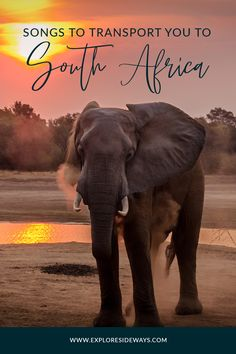 We're transporting you from your living room to vibrant South Africa through its toe-tapping beats and sweet, soulful melodies. Cape Town South Africa, African Safari, Beats, Transportation, Vibrant, Toe, Songs, Explore, Living Room