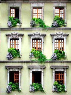 Window Boxes Gardening