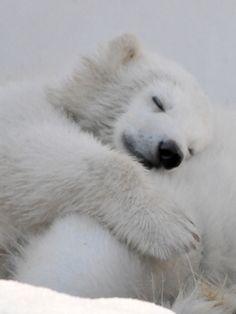 Sweet dreams you little and cute polar bear