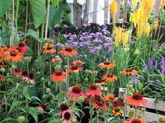 mehcsalogato viragok 08 Plants, Plant, Planets