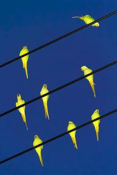 Yoshinori Mizutani,Tokyo Parrots, (2013). | Art Ruby