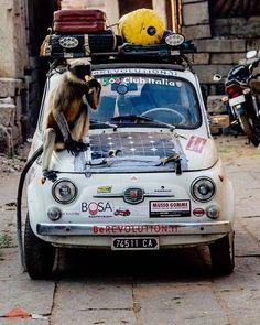 Prosegue il viaggio di Luca e Andrea a bordo della loro Fiat 500 da Torino a…