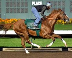 California Chrome worked 5 furlongs in 1:01 on June 11 2016 California Chrome Drills at Los Alamitos