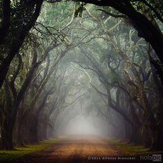 Oak Alley in Louisiana
