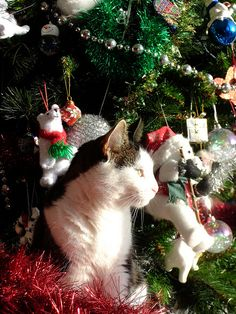 Unexpected holiday pairings are the best! And luckily for you, GEICO's delightful Customer Service goes purr-fectly with delighted holiday cats. Cat Christmas Tree, Christmas Kitten, Christmas Animals, Holiday Tree, Christmas Holiday, I Love Cats, Cool Cats, Crazy Cats, Santa's Little Helper