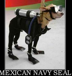 Navy SEAL Dog Breed   ... Joe: Hispanic Discrimination in Photo of 'Mexican Navy Seal