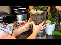 Самый лучший способ посадки орхидей Фалинопсис Часть 1 - YouTube