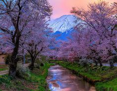 Travel to Mount Fuji: The Magnificent Mountain of Japan