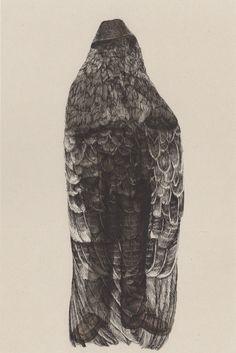 Burials - Evie Woltil Richner