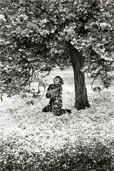 © Edouard boubat La fête des cerisiers
