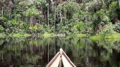 Paddling a dugout canoe in a swamp in the Peruvian Amazon (searching for a Green