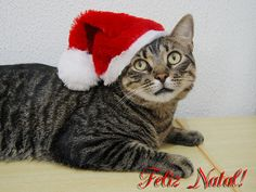 Merry Christmas  :-)  Kitten