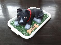dort - pes Staford 3D / cake - Staford dog 3D