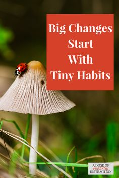 Habit formation is difficult and complicated, but then...so is ADHD. I recently tried BJ Fogg's Tiny Habits system and it has changed my whole outlook. You can make lasting positive change in your life by making tiny changes. Seriously!