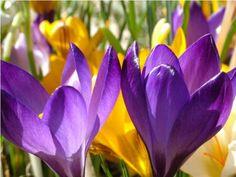 Quadro Tela Decorativa Primavera Flores Coloridas 90x60cm - Decore Pronto