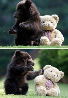 Baby bear vs teddy bear. :)