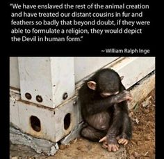 Stop animal cruelty. THEY HAVE FEELINGS, AND SOULS, AND FEEL PAIN, JUST AS MUCH AS WE DO!