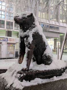[OC] Jan Hachiko covered in snow at Shibuya Crossing Bear Attack, American Akita, Hachiko, Akita Dog, Dark Places, Dog Love, My Best Friend, Paradise, Beautiful Pictures