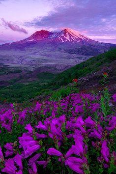 Alpenglow, Mt St Helens, Washington