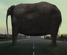 Animal Regulation, 2008 © Di Liu