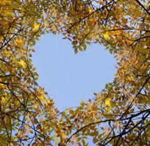 liefde tussen bomen?