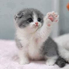 love cat cute pink rainbow magic kitty kitten kind gray paw fuzzy New GIF on Giphy Rainbow Magic, Cute Pink, Best Brand, We Heart It, Kittens, Meme, Animals, Collection, Group
