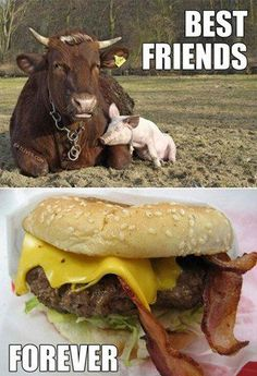 Nothing Can Separate Me & My BFF #funnyanimalpictures