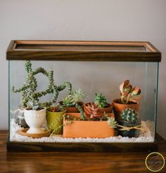 Easy DIY Terrarium From an Old Fish Tank