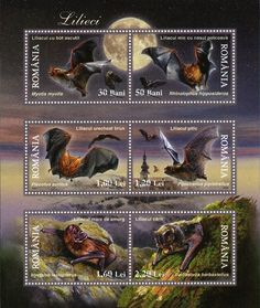 If our Post Master Adopted these as our next set of stamps.....  I'd buy a sheet, just to frame them. I think their beautiful!