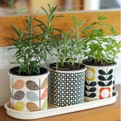 3 cache-pots en email - Orla Kiely vintage rétro Orla Kiely, Pot Jardin, Pot Plante, Drupal, Winter House, Mid Century House, Green Plants, Decoration, Planting Flowers