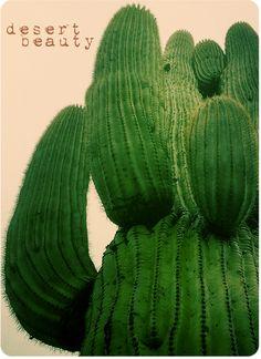 beautiful saguaro cactus