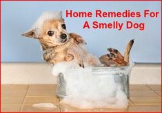 Use Contact Lens Solutions To Clean Dog Tear Stains Dog