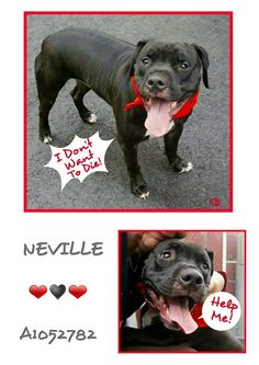 Neville I will keep posting because the right family will see you and fall in love with you