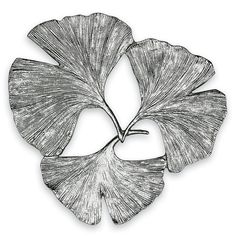 1000 Images About Everything Ginkgo On Pinterest Leaves