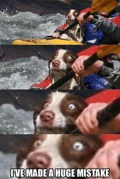 lolol a carinha do cão!!!