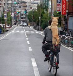 Awww! Look at that sweet, fearless, little pup along for the ride. Adorable.    Although a bit unsafe if it happens to fall off from any unsteadiness from the man riding the bike.