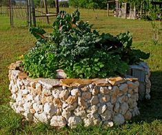 """Keyhole garden in Texas by Deb Tolman. """"If all the layering guidelines have been followed, watering is at a minimum, evaporation is at a minimum, all plants look nutrient fed, and productivity is high."""" Deb Tolman.  www.facebook.com/keyholegardens"""
