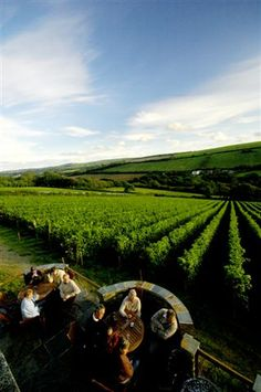 Camel Valley - a gorgeous hidden corner of Cornwall - take a wine tasting tour.