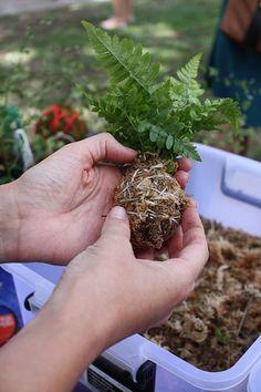 Unique Flower kokedama Ball Ideas for Hanging Garden Plants selber machen ball Ikebana, Moss Garden, Garden Plants, Air Plants, Indoor Plants, Art Floral Japonais, String Garden, Paludarium, Hanging Planters