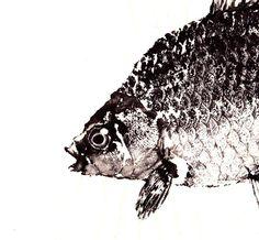 GYOTAKU print  - traditional Japanese fish art