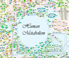 "An international team of researchers has debuted what they're calling a ""Google map"" of the human metabolism --the most expansive virtual model of human metabolism to date, called Recon 2. Welcome to the future!"