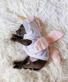 Dog + unicorn= ❤