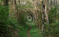 appalachian trail - Поиск в Google