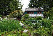 Garden, Rose Harbour