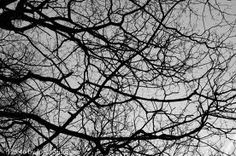 black and white trees - Google Search