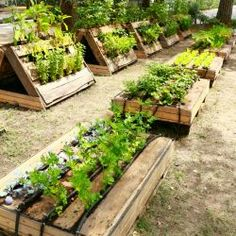 This pallet garden will show you an amazing yet simple way to use pallets for growing your own vegetable and herbs.