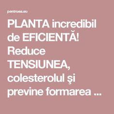 PLANTA incredibil de EFICIENTĂ! Reduce TENSIUNEA, colesterolul şi previne formarea CHEAGURILOR de sânge Good To Know, Cardio, Apothecary, Pandora, Medicine, Diet, Plant, Pharmacy, Cardio Workouts